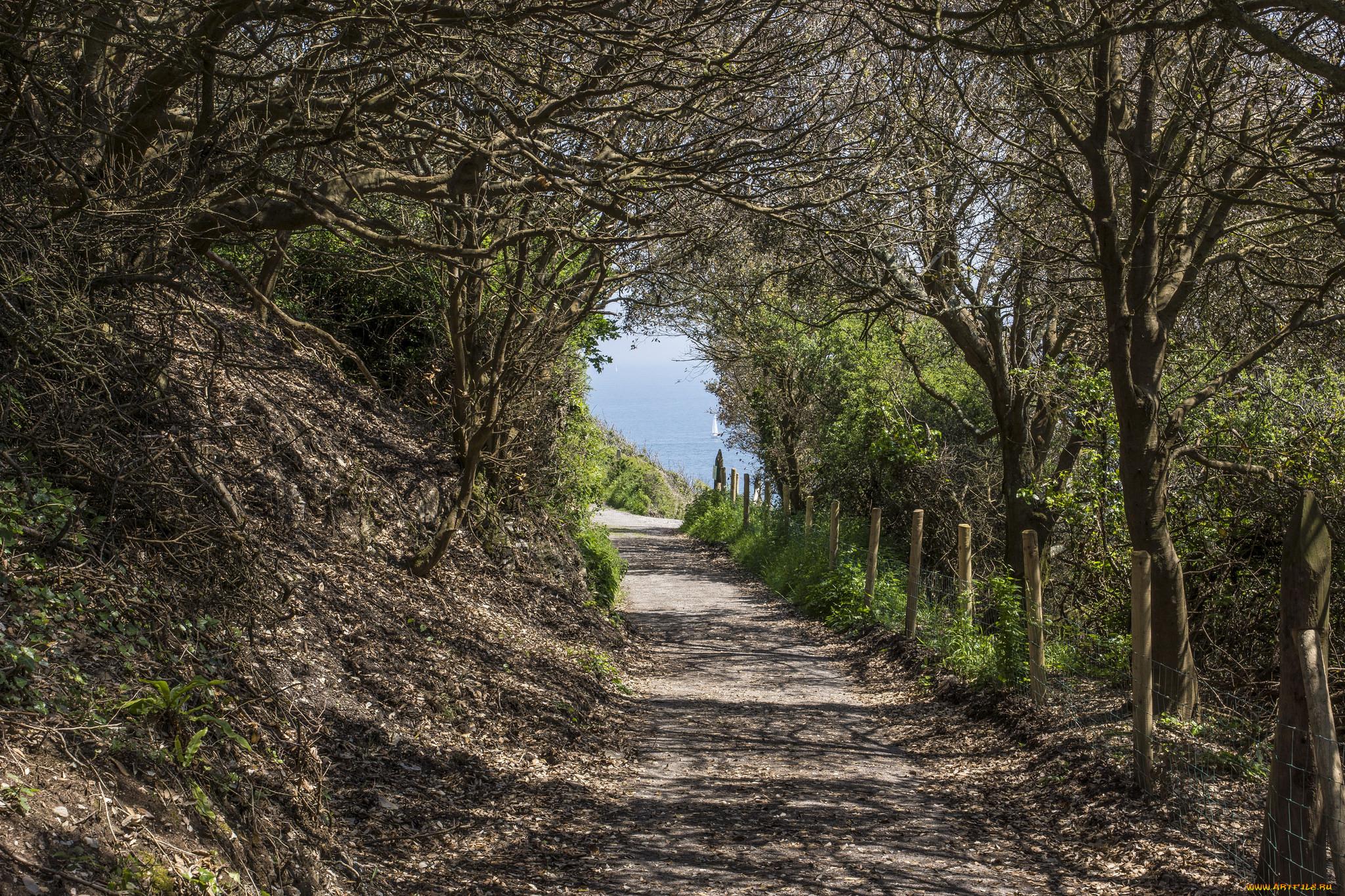 природа, дороги, тропинка, деревья